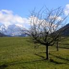 Apfelbaum vor dem Haus