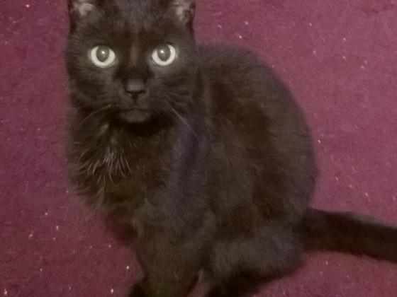 Mein schwarzer Teufel^^
